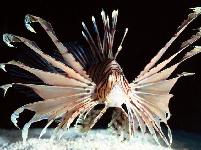 Puzzle gt gt deniz sualtı gt gt deniz canlıları gt gt ilginç deniz